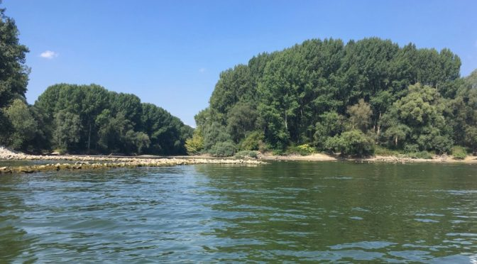 Lingenfelder Altrhein nicht befahrbar